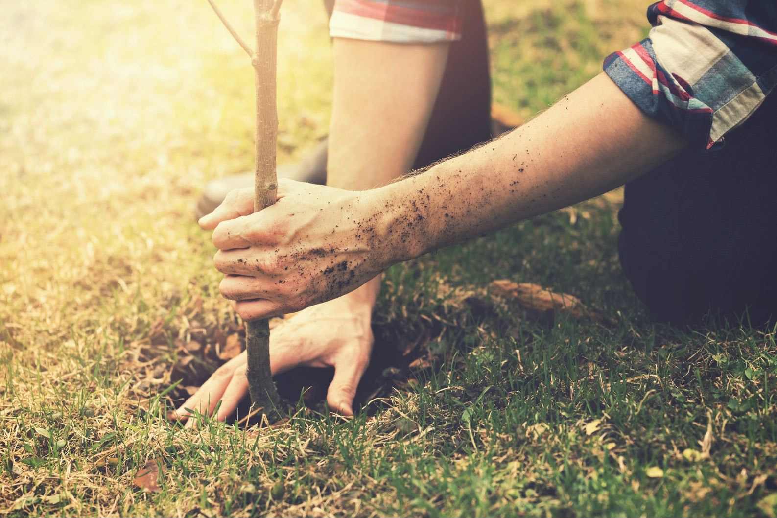 We Plant a Root
